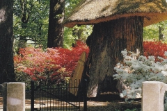 Thatched Tulip Tree House in Bloom